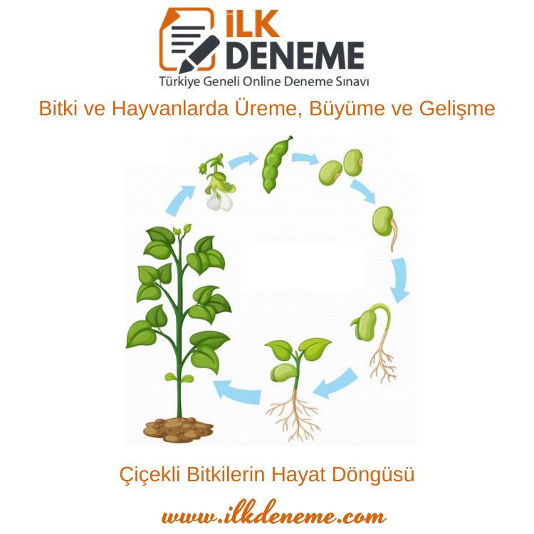 Bitki ve Hayvanlarda Üreme, Büyüme ve Gelişme Konu Anlatımı 7.Sınıf